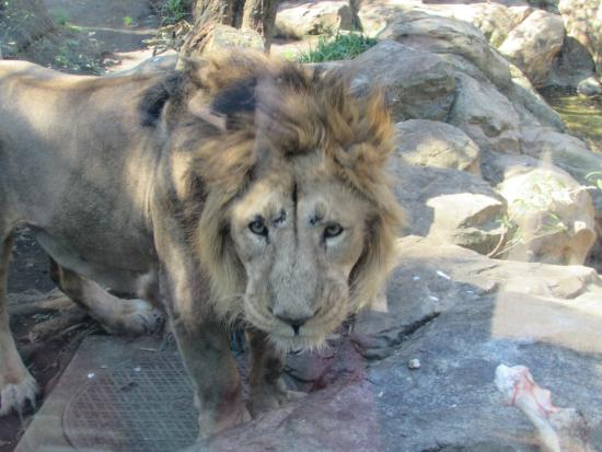 7 - Picture of Ueno Zoo, Taito - TripAdvisor