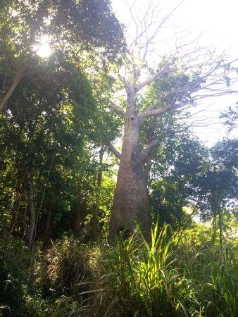 L'Esperance Trail