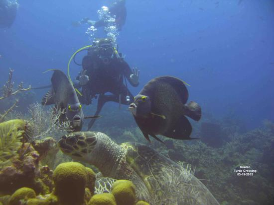 West End, Honduras: Thank you Coconut Tree Divers!