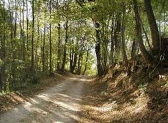 Giavera del Montello, Italy: panorama presa 18