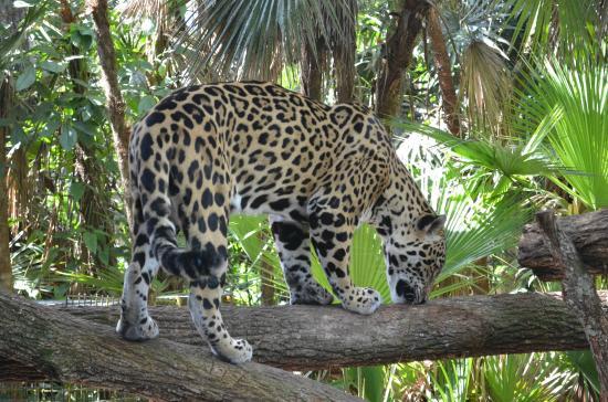 Belize Zoo Tours Tripadvisor