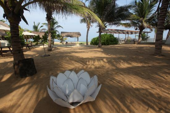 Dolphin Beach Resort: Barefoot pleasure