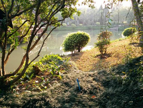 Rim Doi Resort: The pond & scenery