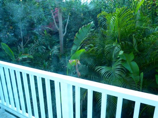 Bears' Place Guest House: lush vegetation surrounding the lanai