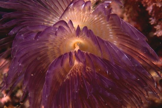 Odisseia Azul - Centro de Mergulho