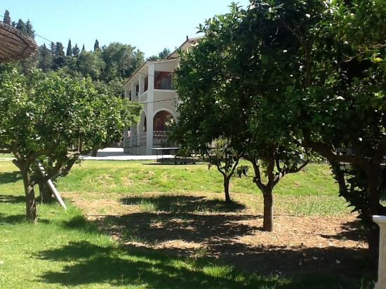"Olive Grove Estate ""Eleas Gi"": Beautiful surroundings"