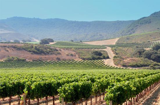 Lompoc Vineyards (Photo Courtesy of ExploreLompoc.com)