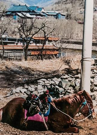 Dailuo Ding of Wutai Mountain: Resting pilgrims pony, Wutaishan