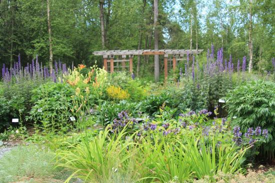 Garden Area Picture Of Alaska Botanical Garden