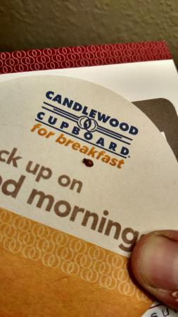 Bed Bug Picture Of Candlewood Suites Manassas Tripadvisor