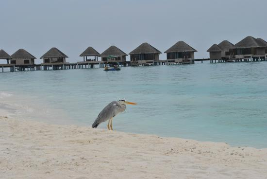 Vaadhoo Island Resort Cost