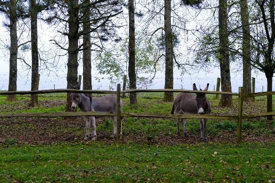 Un matin dans les bois montreuil sur mer frankrike omd men och prisj mf relse tripadvisor - Un matin dans les bois ...