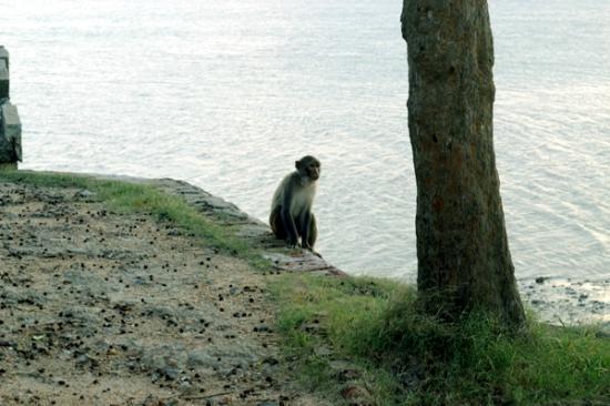 Sundarbans National Park, Inde : Jharkhali River SIDE
