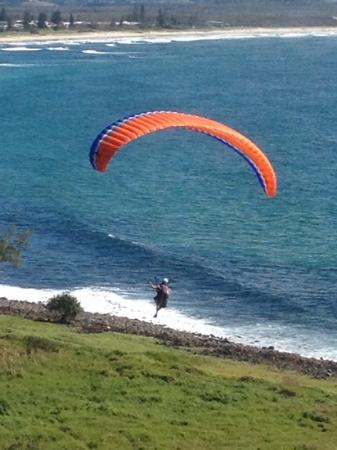 North Coast Holiday Parks Lennox Head : Paragliders take off from Lennox Point