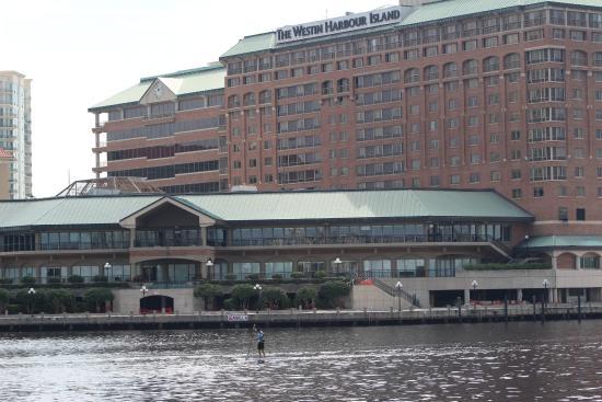The Westin Tampa Waterside Paddleboarding Race Across Hotel