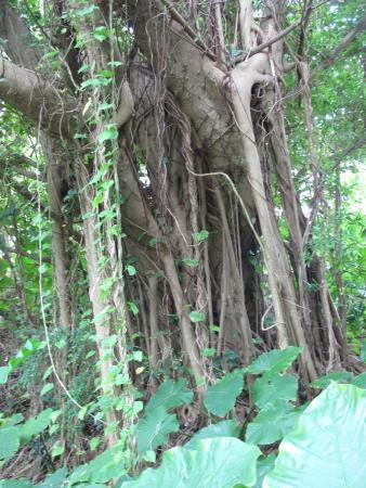 Sueyoshi Park: Cool trees