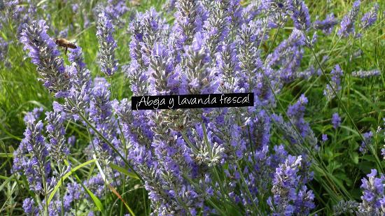 Abeja y lavanda fresca en el jard n picture of hotel el for Ahuyentar abejas jardin