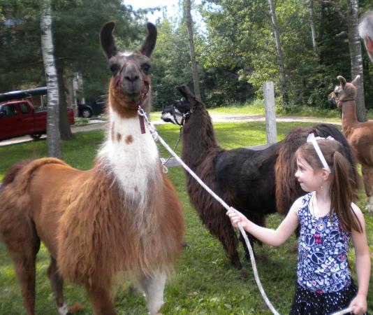 Storybook Farm Llama Trekking B&B: Llama fun!!