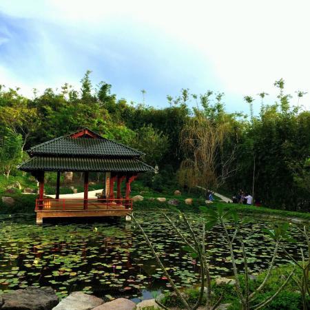 Jard n japon s picture of jardines de mexico jojutla for Jardin japones