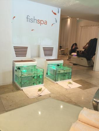 Le Blanc Spa Resort: Fish spa. Must try