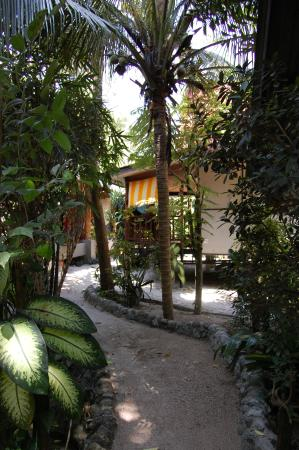 Dolphin Bungalows: Path.