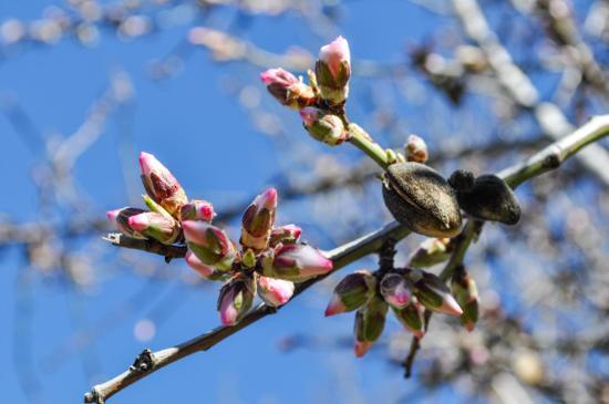 La Taha, Spain: almond blossoms