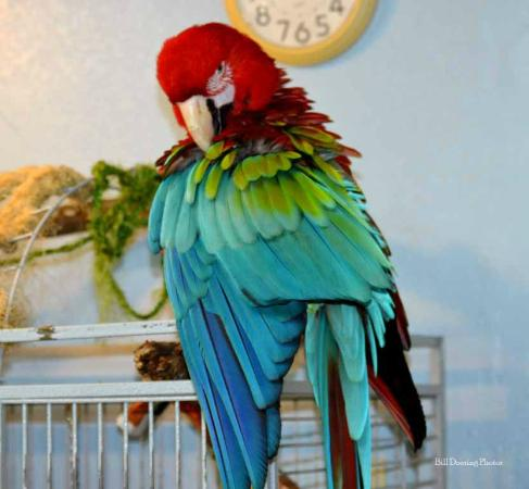 South Texas Botanical Gardens & Nature Center: One of the parrots I got to feed