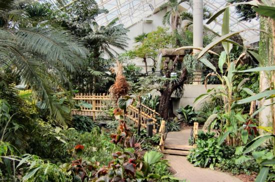 Attirant Foellinger Freimann Botanical Conservatory: Tropical Garden