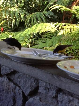 Papillote Wilderness Retreat: Hungry birds at breakfast