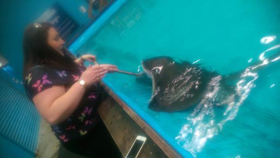 The Australian Shark & Ray Centre: Big Black Ray