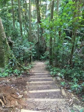 Mt Warning Rainforest Park: Mt Warning