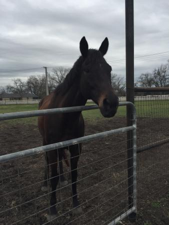 Texas Trail Rides: One of their sweet horses!  ��