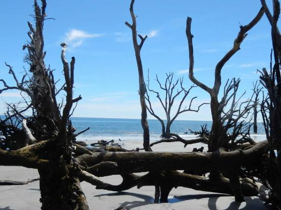 Hunting Island State Park Campground: Beach at low tide