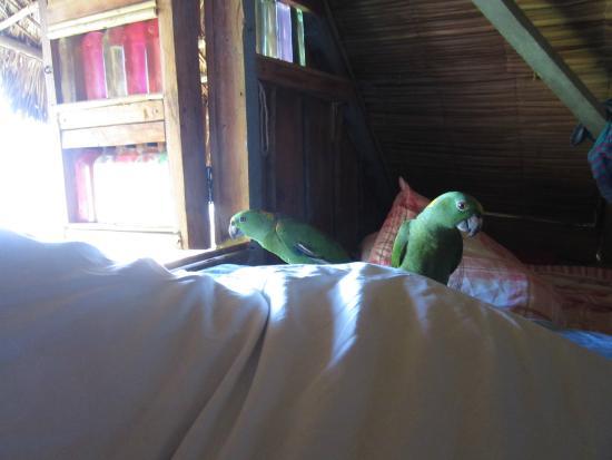 Derek's Place: parrots