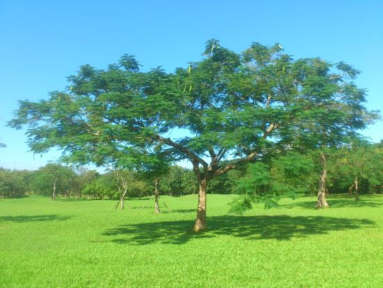 羅東運動公園:綠地大樹