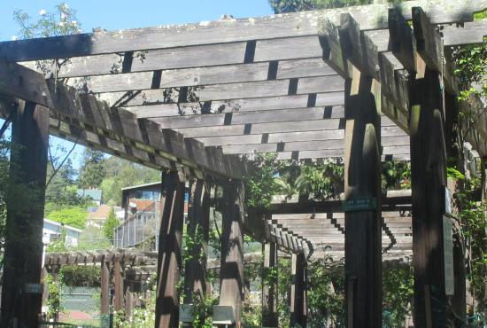 Berkeley Municipal Rose Garden Berkeley Ca Picture of Berkeley