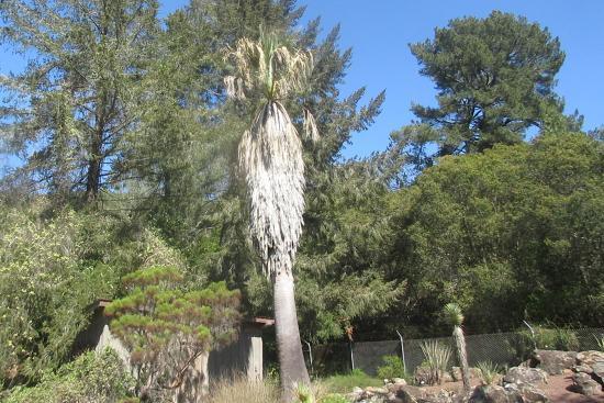 Regional Parks Botanic Garden, Berkeley, Ca