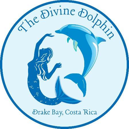 Drake Bay, Kosta Rika: The Divine Dolphin