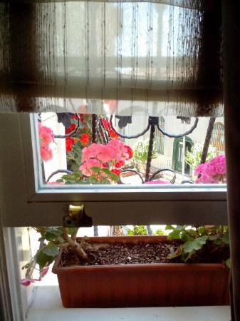 Dilhayat Kalfa Hotel: Plant/Window Sill