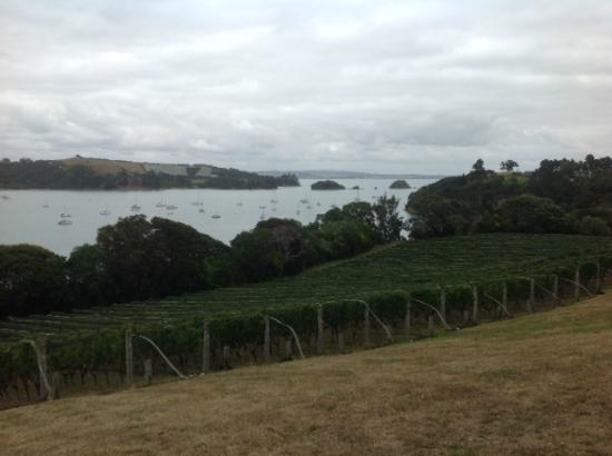 Goldie Vineyard: view of water from vineyard