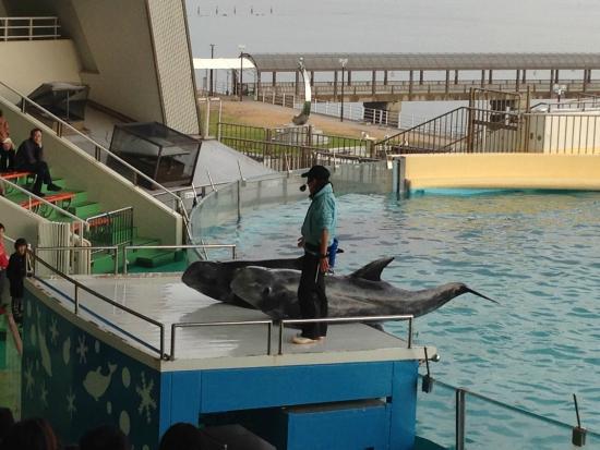 船着き場からのアプローチ - Picture of Marine World umino-nakamichi, Fukuoka - TripAdvisor