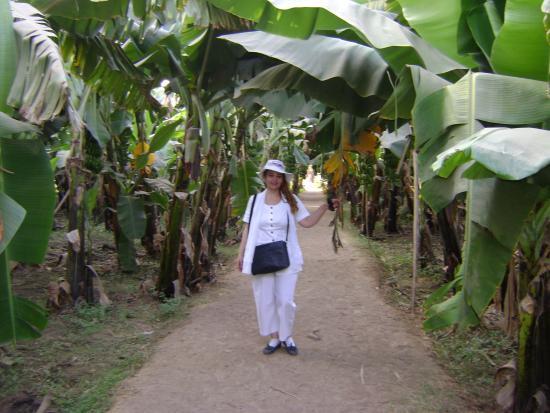 Banana Island (Gezira el-Mozh): Bananaaa