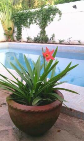 Jardin Azul: flowers and harmony for a clean paradise :)