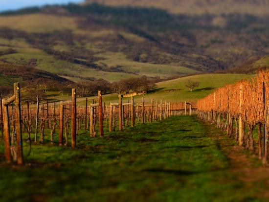 Grizzly Peak Winery: Vineyard - Spring 2015