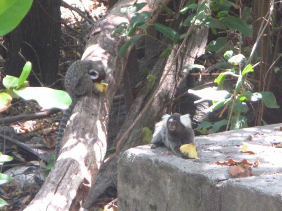 Coco Park : Fauna do parque