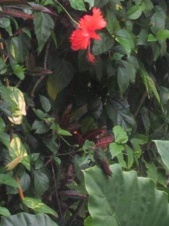 Hotel Kelly Creek: hummingbird and hibiscus