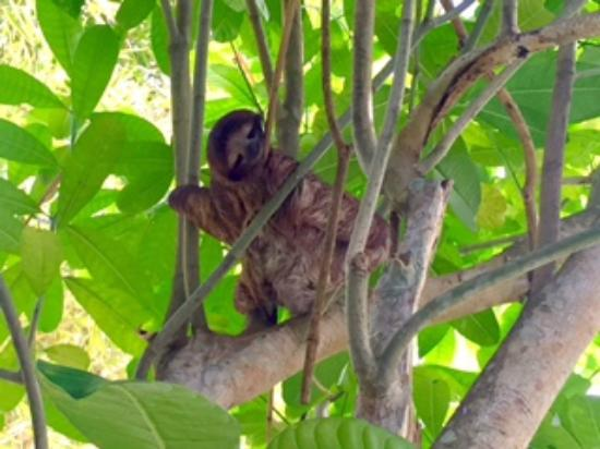 The Lotus Garden: Baby sloth over the pool