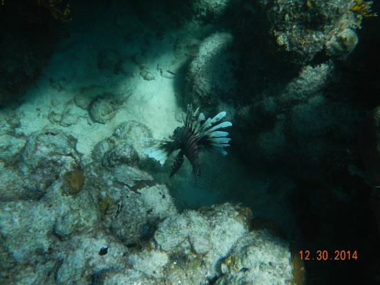 Belize Underwater: Lionfish