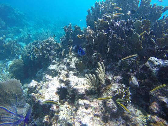 Belize Underwater: Various reef fish