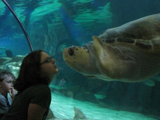 Friendly Turtle Fotograf A De Sea Life Minnesota